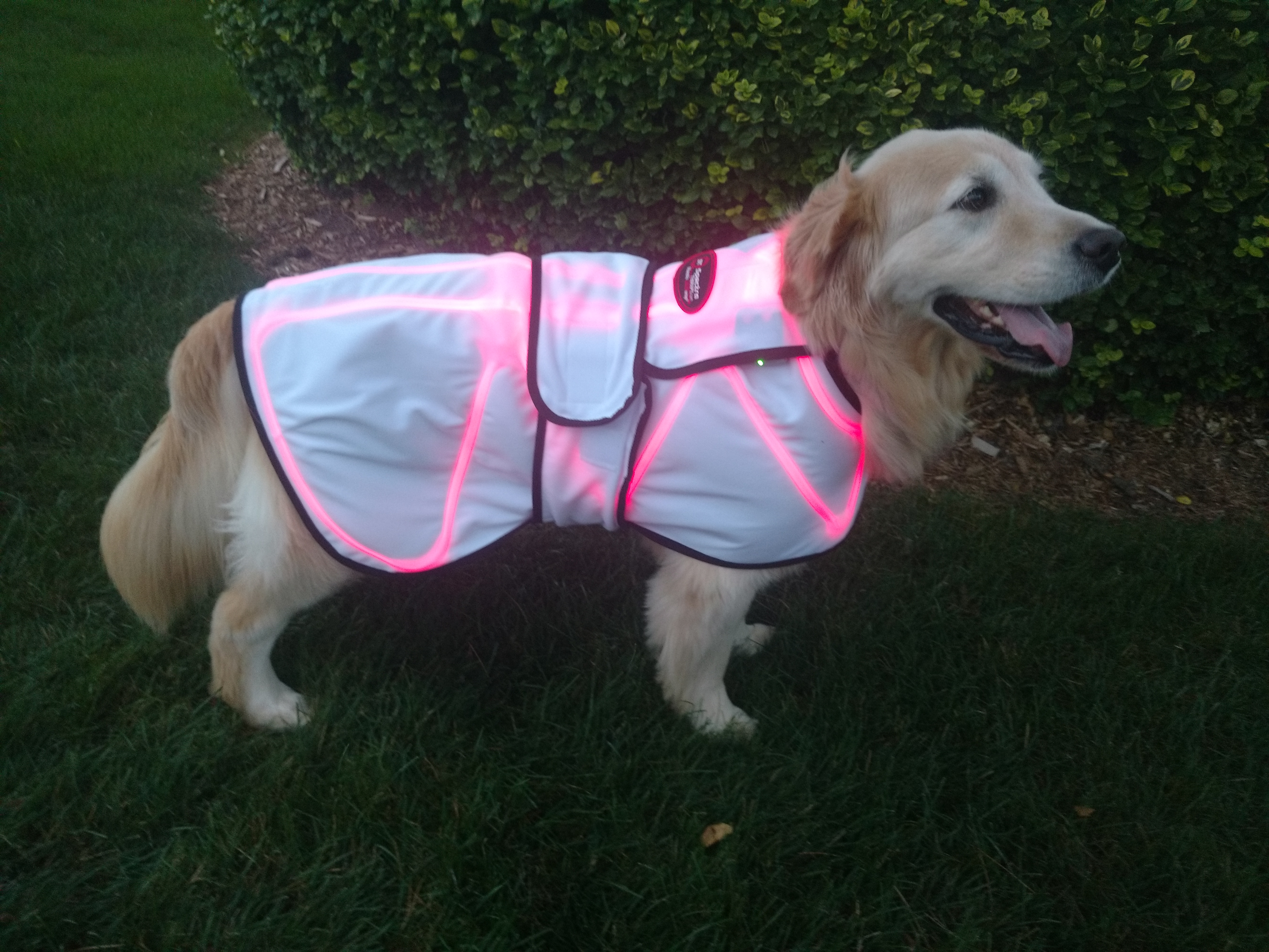 Laserwrap Xlarge Dog Coats Coat Only Spectra Therapy Canine